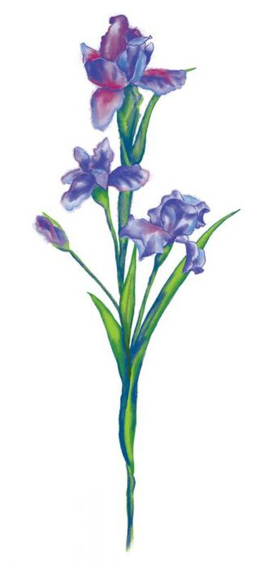 Watercolor Iris Temporary Tattoo image number null