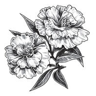 Gray Carnation Temporary Tattoo