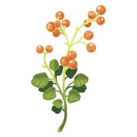 Berry Red Floral Temporary Tattoo