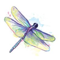 Watercolor Dragonfly Temporary Tattoo