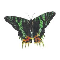 Emerald Shadow Butterfly Temporary Tattoo