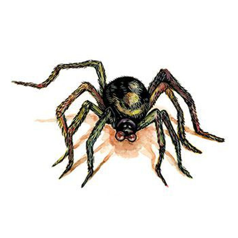 Brown Spider Temporary Tattoo image number null