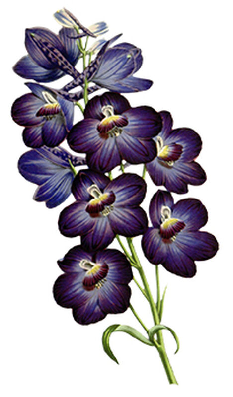 Purple Orchids Floral Temporary Tattoo image number null