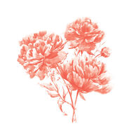 Coral Flower Carnations Temporary Tattoo