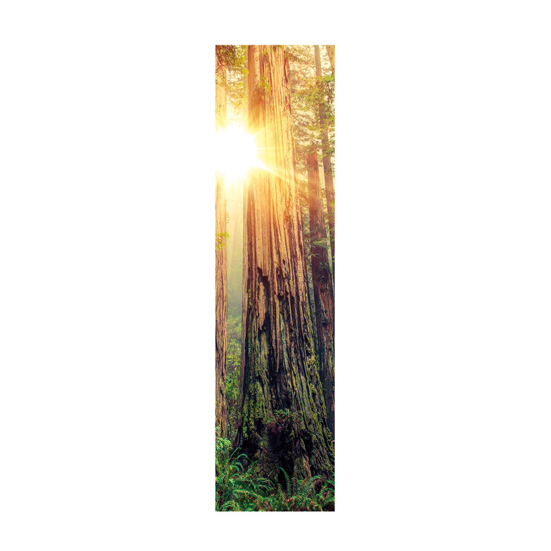 Redwood National Park Frame Temporary Tattoo image number null