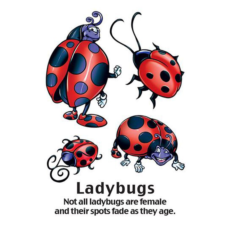 Cartoon Ladybug Temporary Tattoo image number null