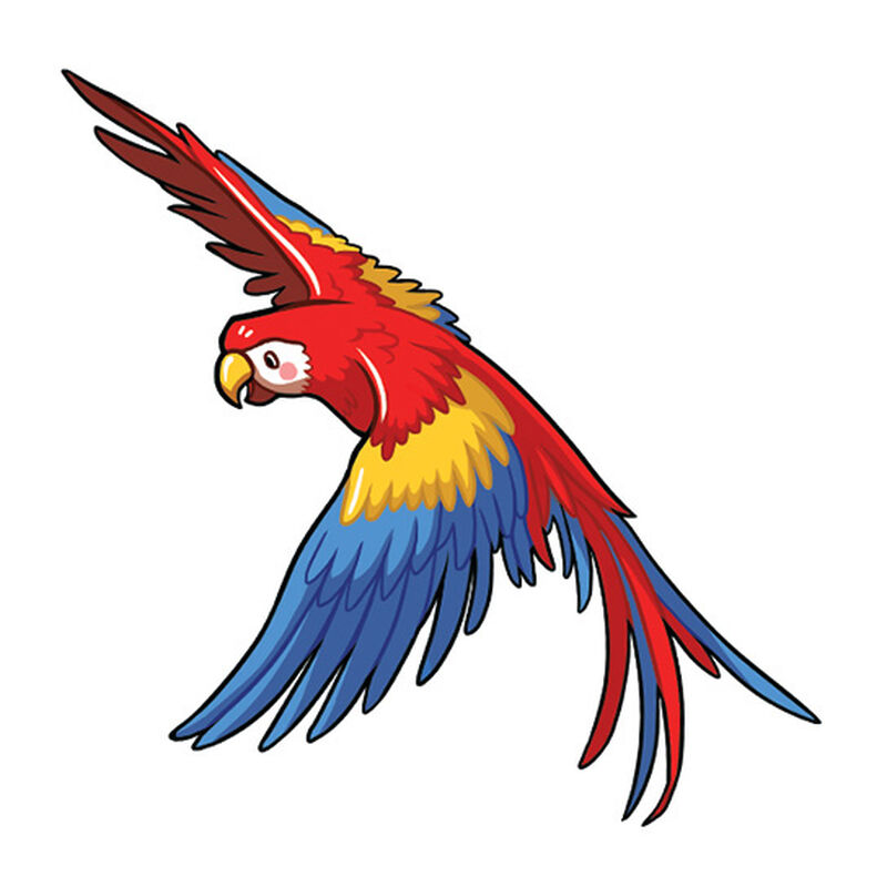 Flying Macaw Temporary Tattoo image number null