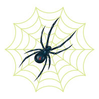 Spider with Reveal Glow-in-the-dark Web Temporary Tattoo