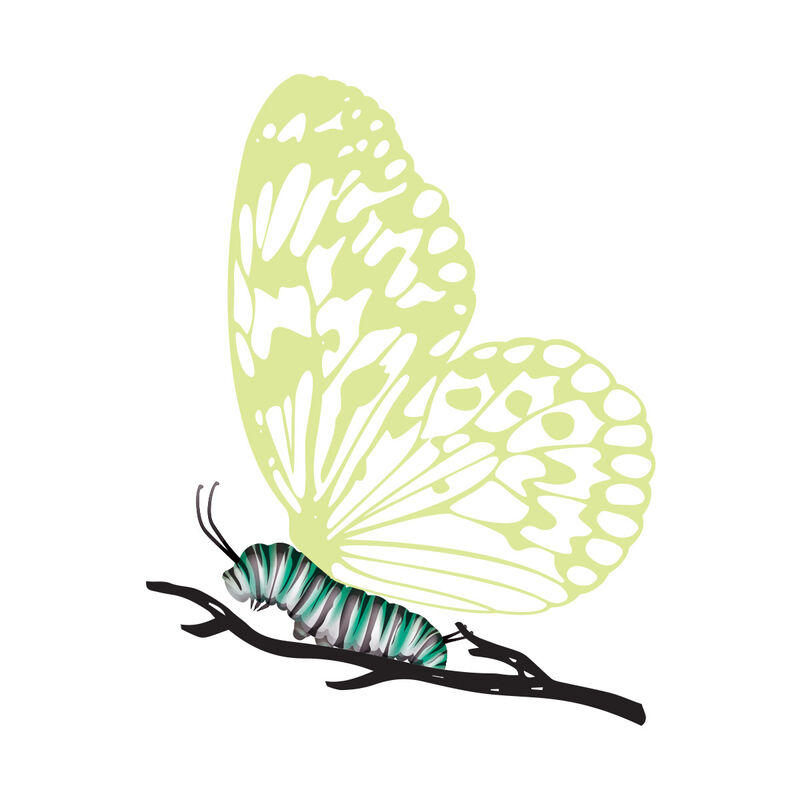 Caterpillar with Reveal Glow-in-the-dark Butterfly Temporary Tattoo image number null