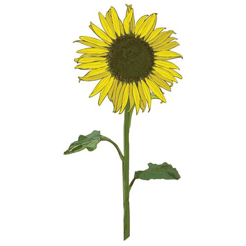 Sunflower Temporary Tattoo image number null