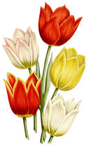 Tulips Floral Temporary Tattoo