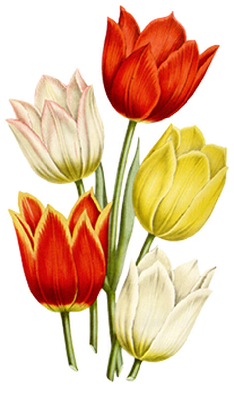 Tulips Floral Temporary Tattoo image number null